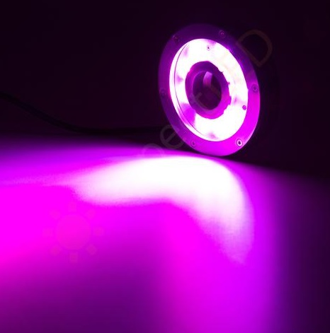 CROWN OF LED RGBW